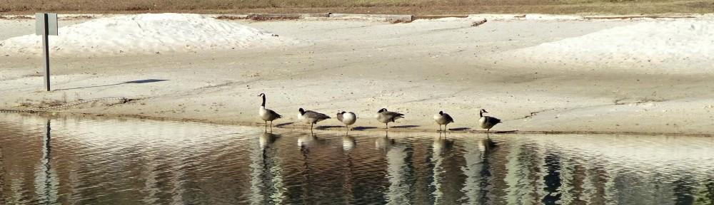 2012-1219-six-geese