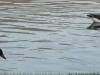 2012-0319-canada-geese-header