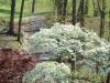 2012-0326-dogwoods-golf-course-header