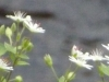 2012-0330-wildflower-header