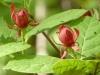 2012-0407-sweetshrub-header