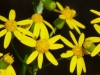 2012-0429-yellow-wildflowers-header