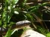 2012-0430-snake-header