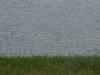2012-0529-canada-geese-header-2