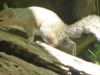2012-0530-squirrel-header