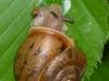 2012-0531-snail-header