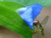 2012-0603-bee-wildflower