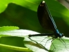 2012-0603-damselfly-header