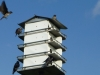 2012-0616-purple-martin-header-2