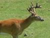 2012-0625-buck-header