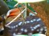 2012-0626-fawn-header