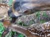2012-0626-twin-fawns-header