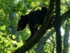 2012-0630-bear-high-header