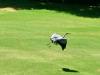 2012-0728-heron-header