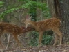 2012-0804-fawns-header