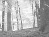 2012-0806-deer-bw-header