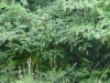 2012-0807-bird-habitat-header
