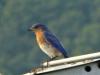 2012-0807-bluebird-header