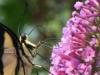 2012-0807-butterfly-header