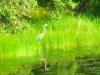 2012-0817-heron-header