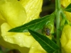 2012-0908-wildflower-fly-header