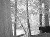 2012-0909-bear-header
