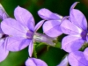 2012-0913-wildflowers-header