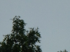 2012-0917-turkey-buzzard-header