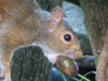2012-0922-squirrel-header