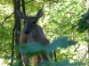 2012-0923-deer-header