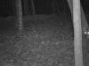 2012-0927-coyote-header