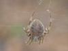 2012-0929-spider-header