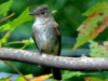 2012-1002-tufted-titmouse-2-header