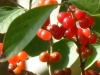 2012-1009-berries-header