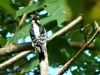 2012-1009-woodpecker-quarry-header