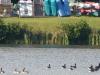 2012-1010-canada-geese-boat-racks-header