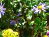 2012-1011-fall-wildflowers-header