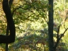 2012-1015-bent-tree-header