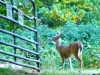 2012-1015-buck-reservoir-header