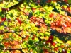 2012-1021-fall-leaves-header