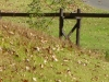 2012-1021-water-wheel-header