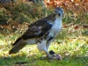 2012-1110-hawk-hole-17-header