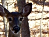 2012-1117-deer-header