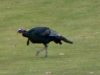 2012-1118-turkey-header