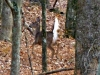 2012-1119-whitetail-deer-header