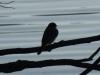 2012-1213-bird-header