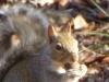 2012-1213-squirrel-header