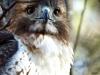 2014-0112-hawk-eyes