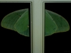 2012-0810-luna-moth