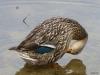 2013-0627-duck-bath-8